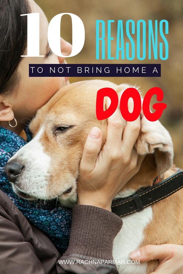 10 reasons not bring dog home